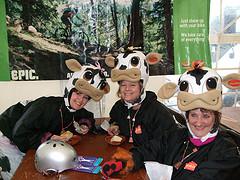 WDYR 08 Cows